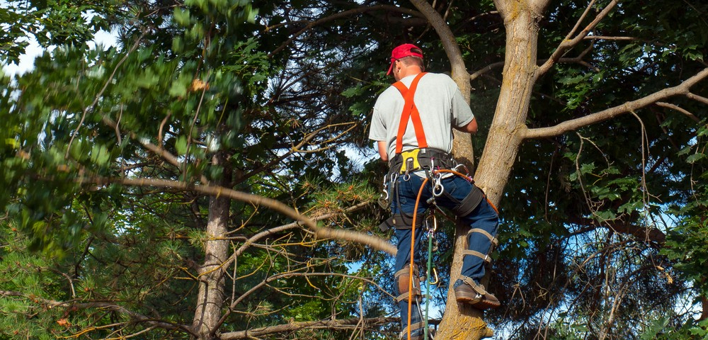 Tree Care Landscaping Services